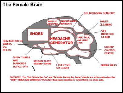 brain_female_sm.jpg