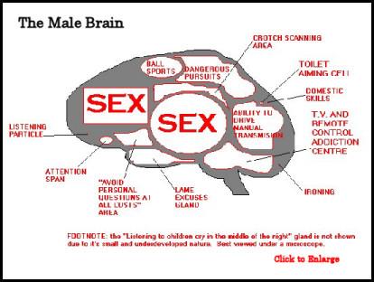 brain_male_sm.jpg